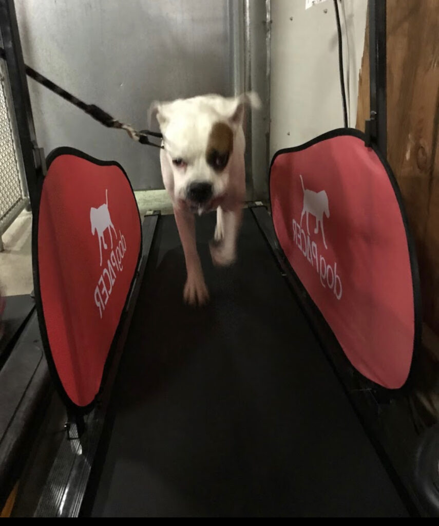 Strong Dog 1